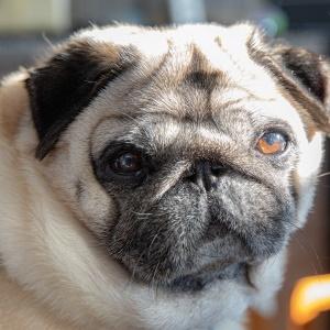 Honden pension
